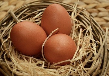 best egg producing chickens