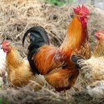 Egg Fertilization