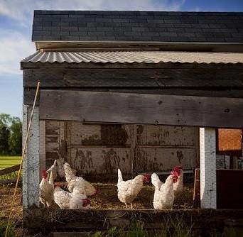 Home Chicken Coop