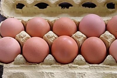clean chicken eggs